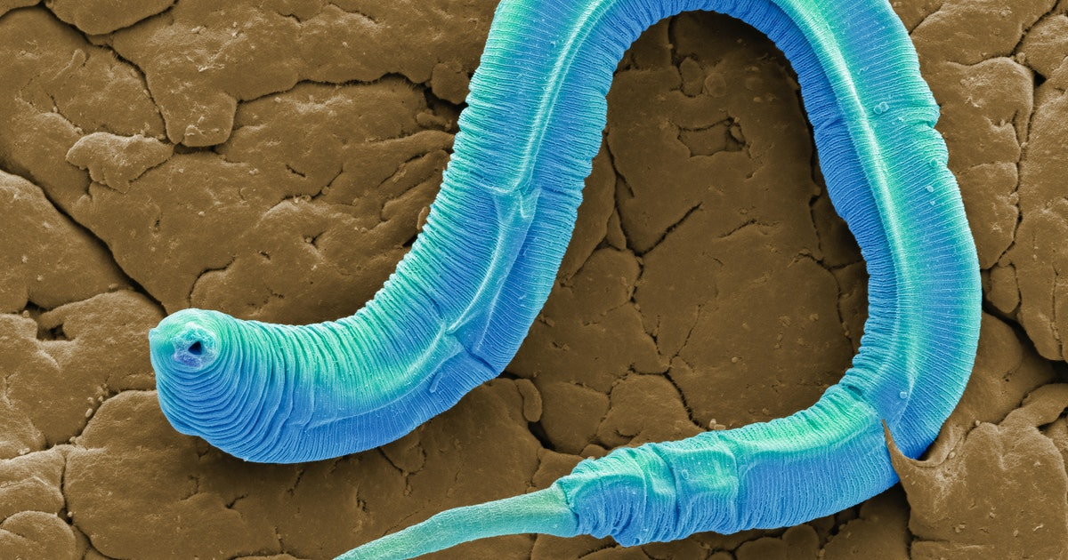 An eyeless worm has upended scientific understanding of color