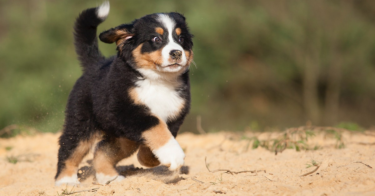 Study finds these 3 dog breeds are most at risk for cancer