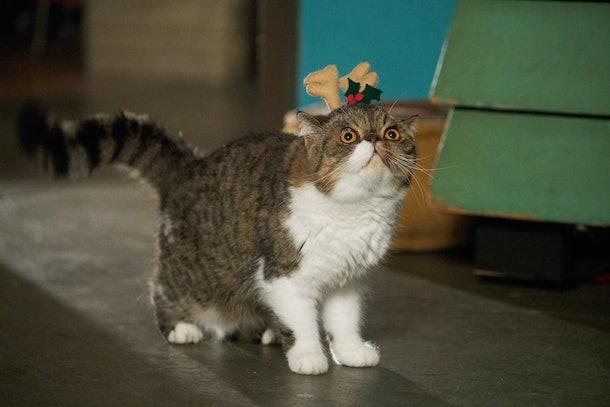 New Girl Character Zodiac: Ferguson the Cat