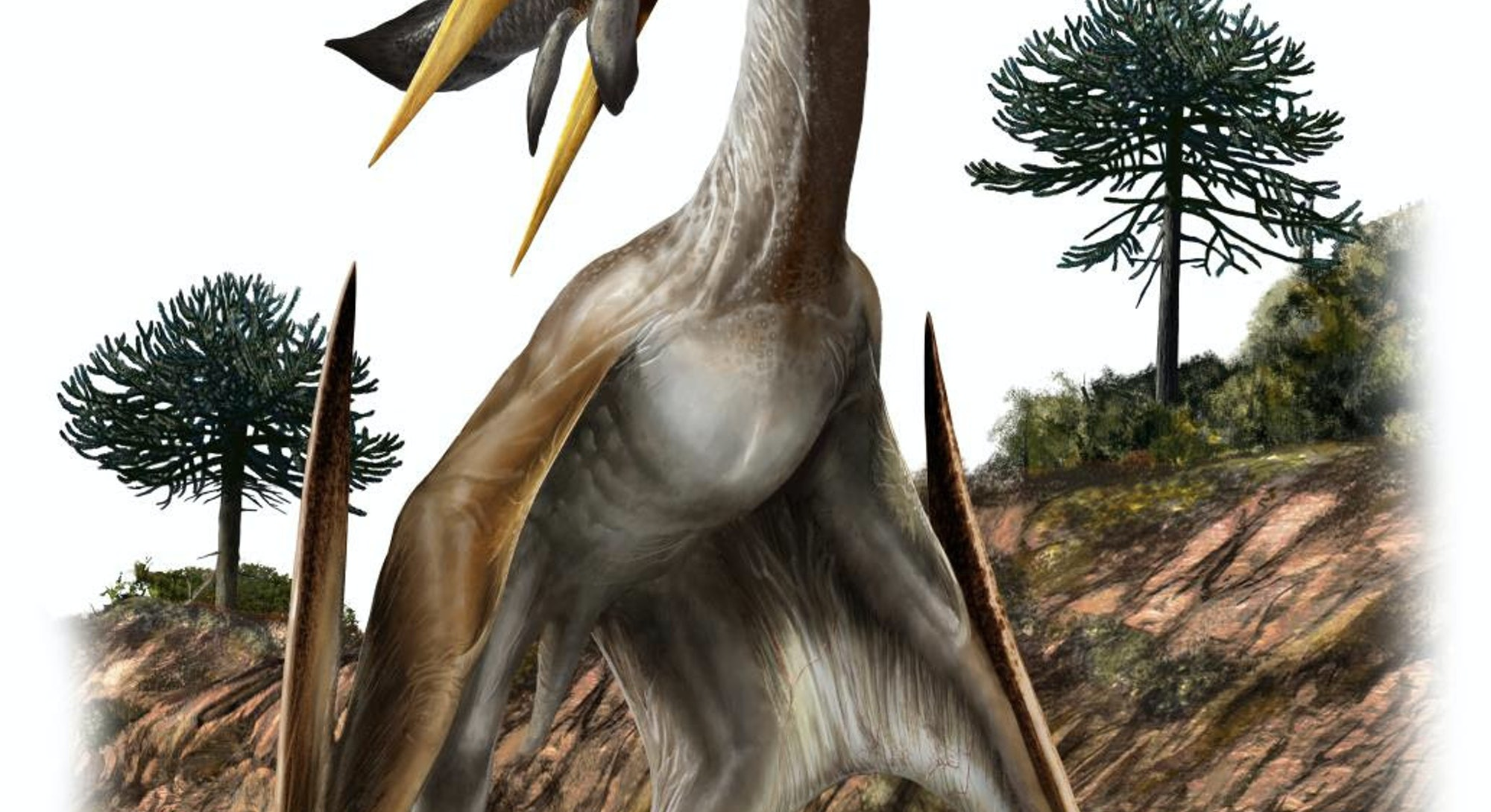 This illustration shows an artist's rendering of a pterosaur (Alanqa saharica).