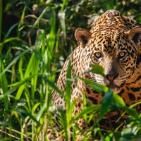 Scientists reveal the 6 places on Earth where we can restore animal life