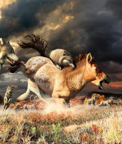 Gray wolves take down a horse on the mammoth-steppe habitat of Beringia during the late Pleistocene (around 25,000 years ago).