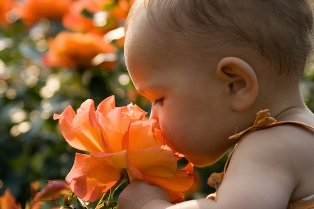 baby smelling a giant rose