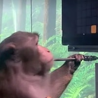 Is Neuralink's monkey Pong video the future? Or something else?