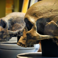Two types of ancient humans found to benefit the health of living people