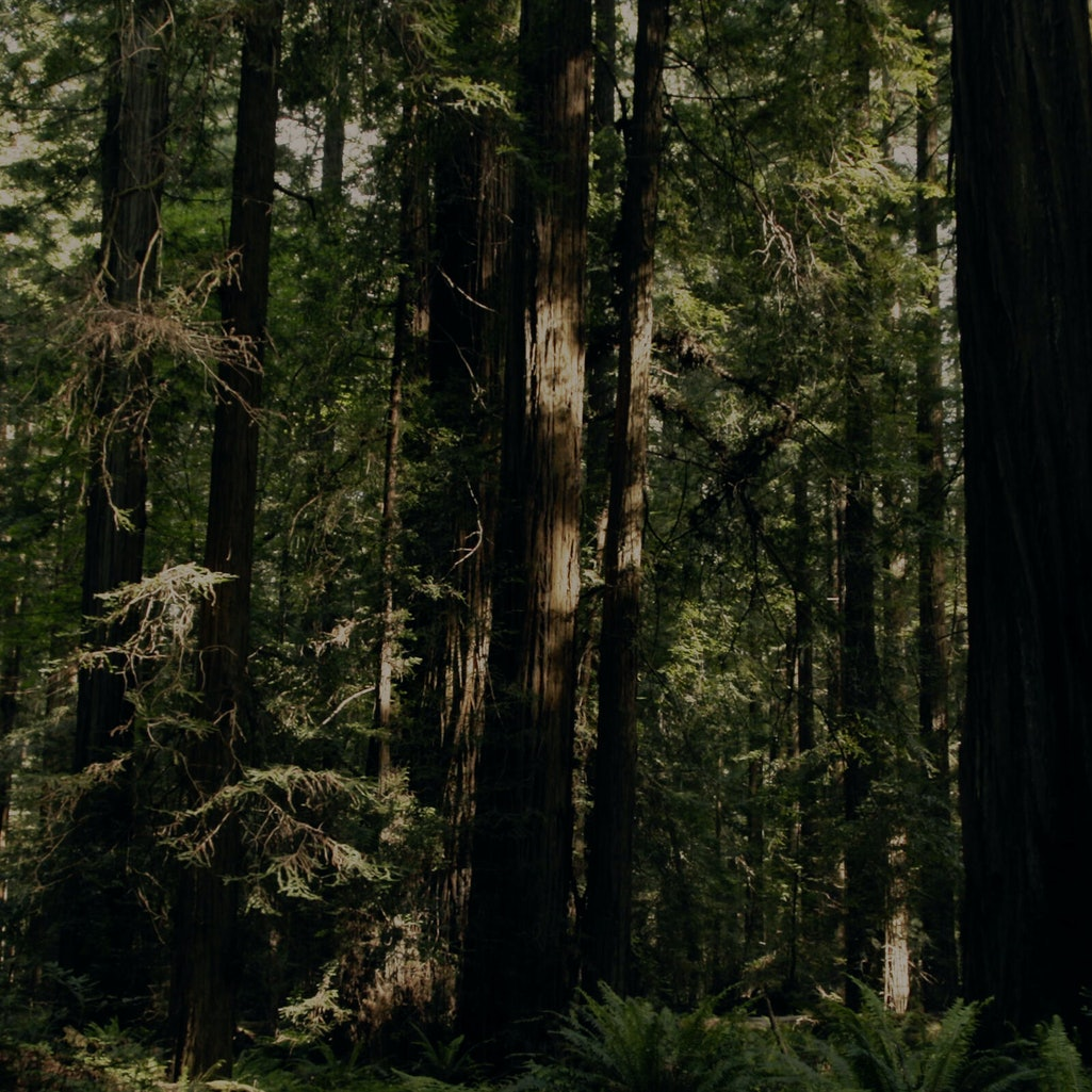 'Sasquatch' documentary. Photo via Hulu