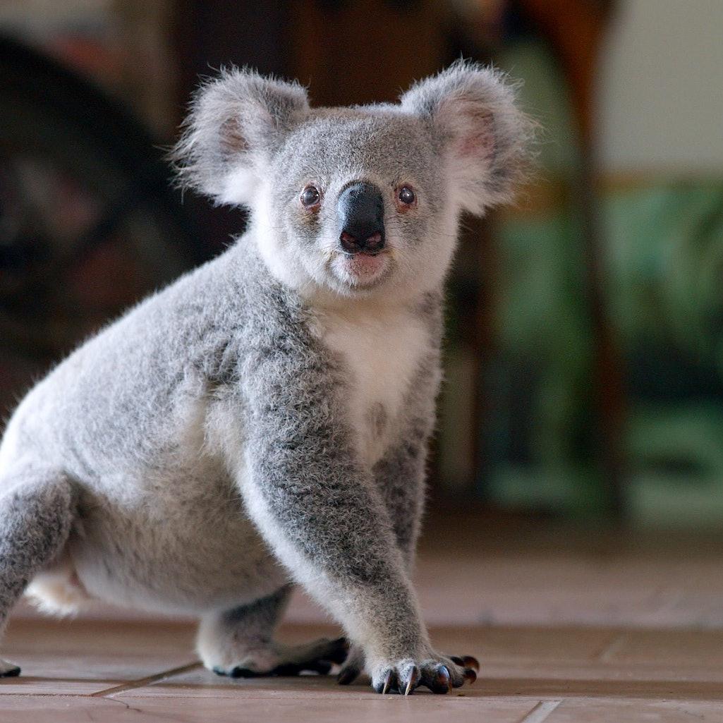 A still from 'Izzy's Koala World,' via the Netflix press site.