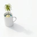 coffee, climate crisis