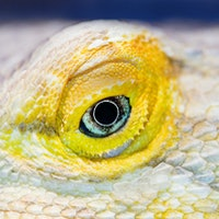 6 animals that can change sexes — and the scientific reason why