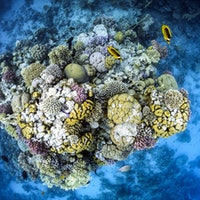 A counterintuitive discovery could save coral reefs