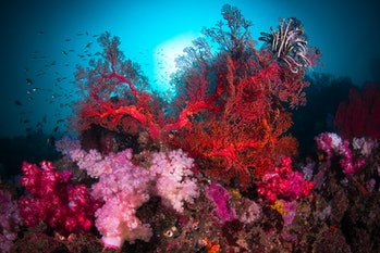 Vibrant red coral in ocean