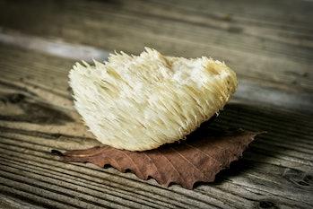 lions mane mushroom functional medicinal