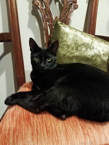 Black cat lying down