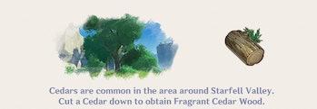 Cedar Wood Genshin Impact Farming Location