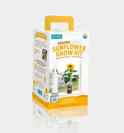 Organic Sunflower Windowsill Grow Kit