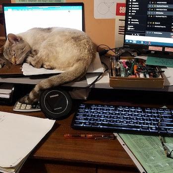 Tabby cat sleeping on laptop