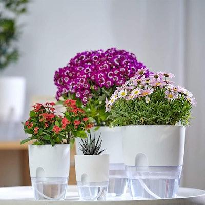 ETGLCOZY Indoor Plant Self Watering Pots (5-Pack)