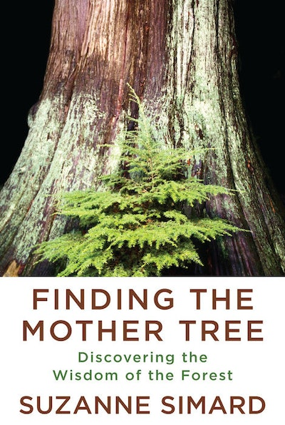 'Finding the Mother Tree: Discovering the Wisdom of the Forest' by Suzanne Simard