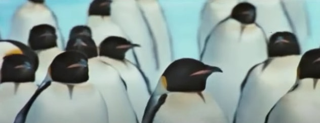 March of the Penguins is a documentary from 2006.