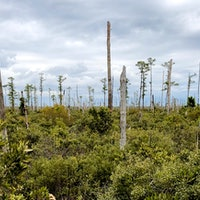 Why 'ghost forests' visible from space are a dire future warning