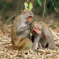 1 monkey trick could help you survive a disaster