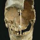 The skull of a modern human female individual from Zlatý kůň.