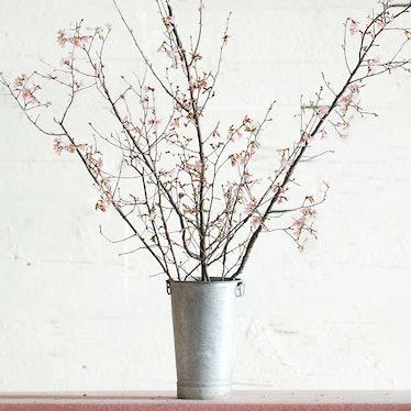 Seasonal Pink Blossom Branches