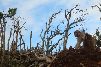 Monkey sitting in barren landscape