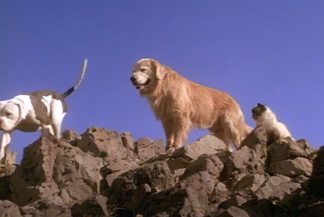Stream Homeward Bound: The Incredible Journey on Disney+.