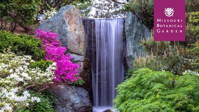 Waterfall & Flowers