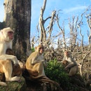 Rhesus macaques in the aftermath of Hurricane Maria in Puerto Rico