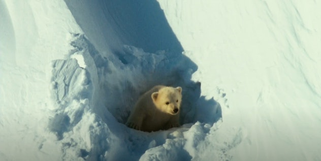 Arctic Tale is a nature documentary from 2007.