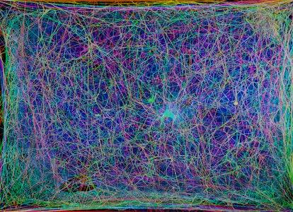 spider web music