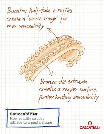 pasta diagram sketch