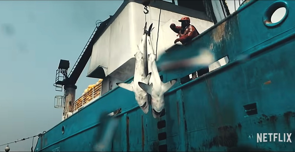 Bycatch (sharks and other fish caught and discarded by fishing vessels) are a major theme in Seaspiracy.
