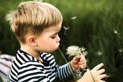 toddler blowing dandelion petals