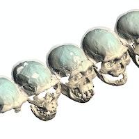 Brain study debunks an assumption about ancient humans