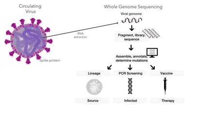 Sequencing the genetic material of the coronavirus can help researchers trace the travel routes of t...