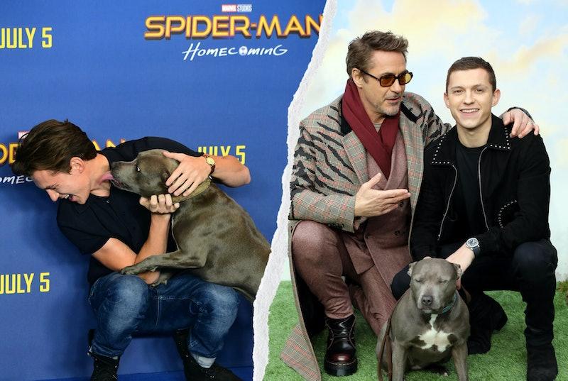 Tom Holland and Robert Downey Jr. with Holland's dog Tessa.
