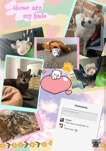 A page dedicated to my pets. Three ferrets, a small white dog, a cat, and a tarantula are pictured.