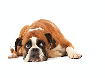 Depressed looking dog