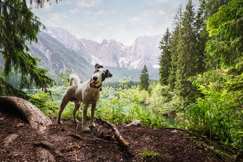 Dog in forest nature setting