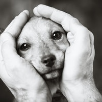 How does human stress affect dogs? 5 personality traits to consider