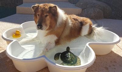 Paw Pool