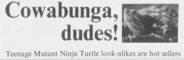 turtles headline