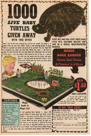 turtle ad