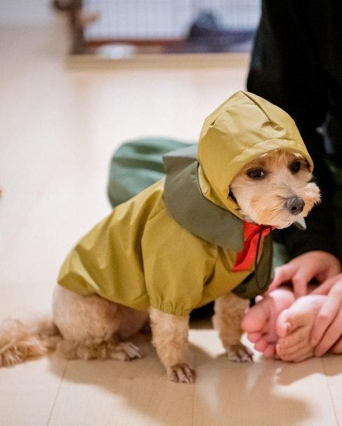 Snow Peak SP Dog Rain Jacket