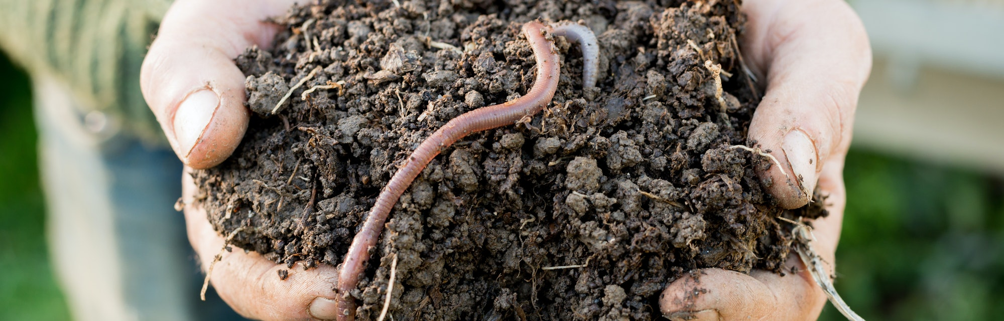 Earthworm on mound of dirt