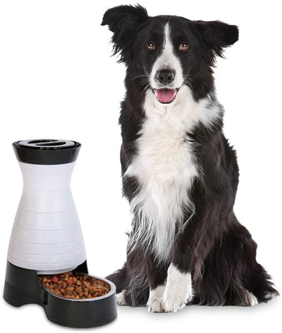PetSafe Gravity Feeder