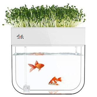 Huamuyu Garden Fish Tank